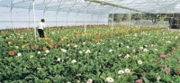 wholesale Flower nursery [sac]